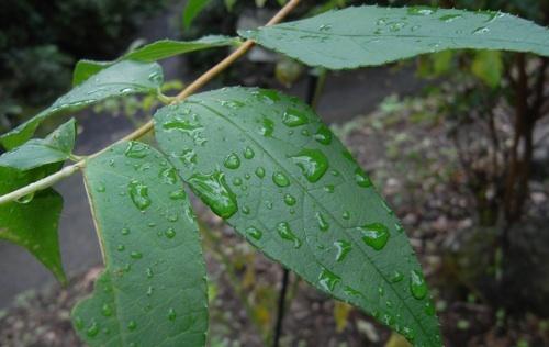 秋雨3.jpg