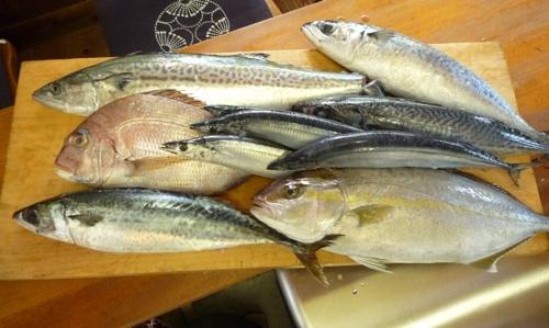 魚1.jpg